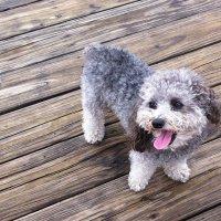PURE BRED RESCUE ANIMAL AMBASSADOR TALKS PET ADOPTION