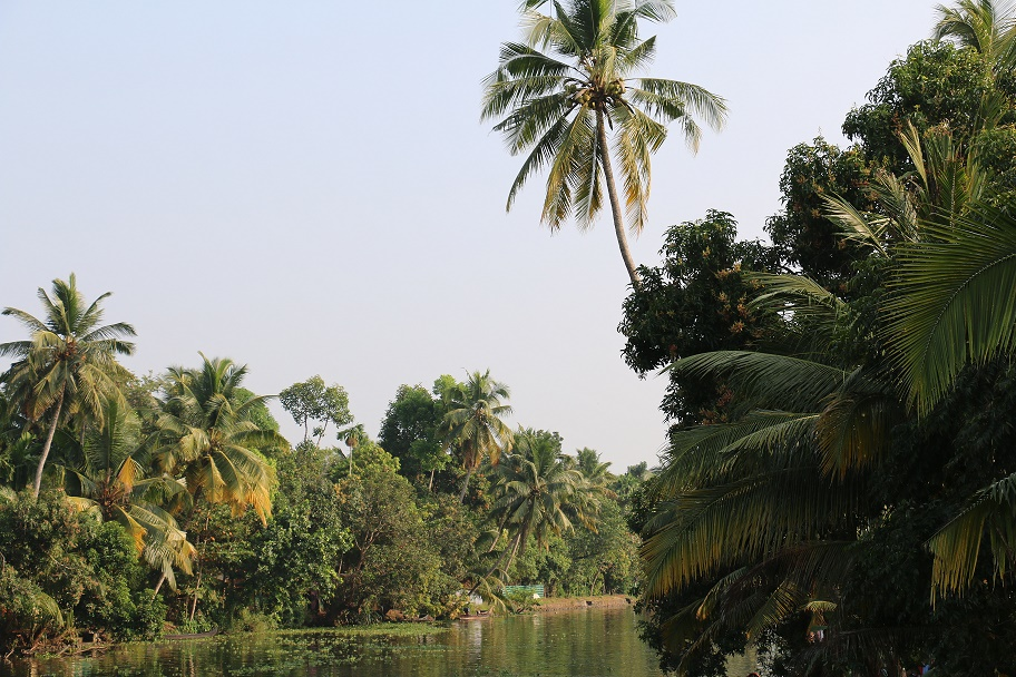 Backwaters_7
