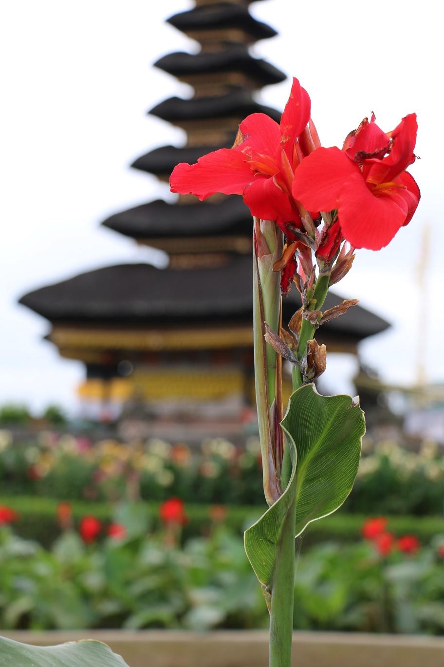 Bali-Bedugul-Tempel-thebraidedgirl