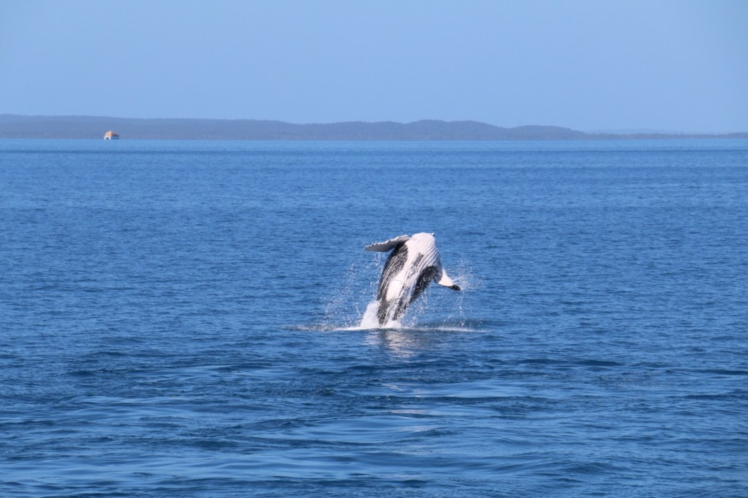 Whale Watching Hervey Bay | thebraidedgirl