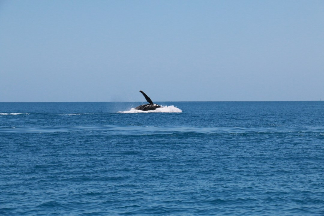 whale-watching-hervey-bay-11-thebraidedgirl