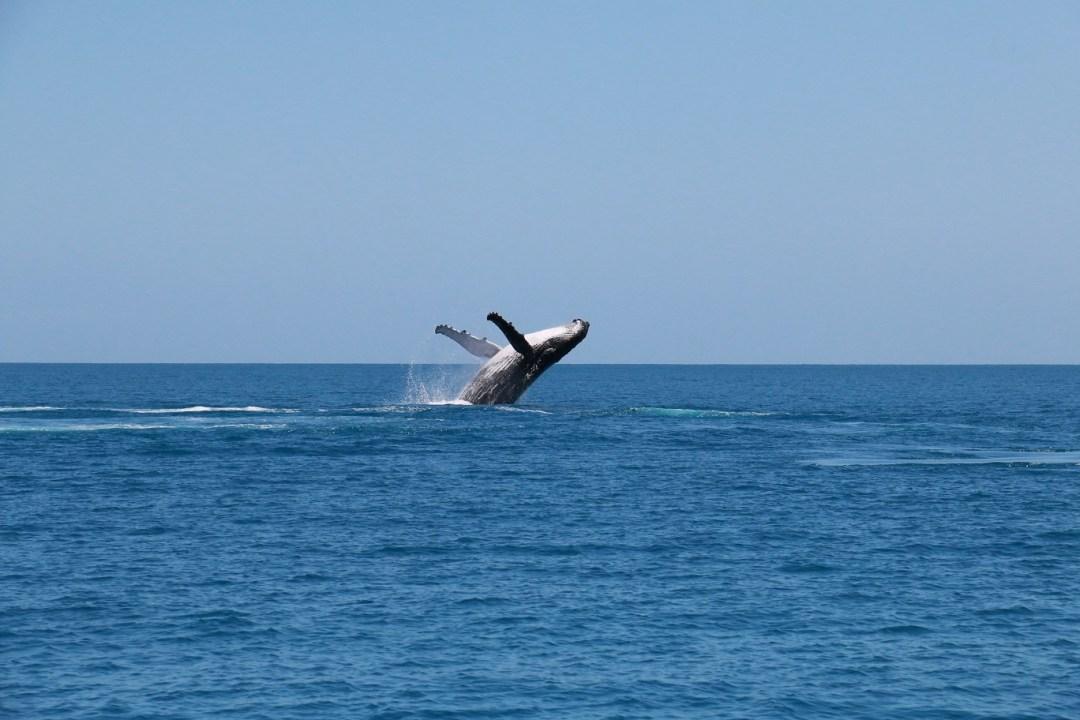 whale-watching-hervey-bay-5-thebraidedgirl