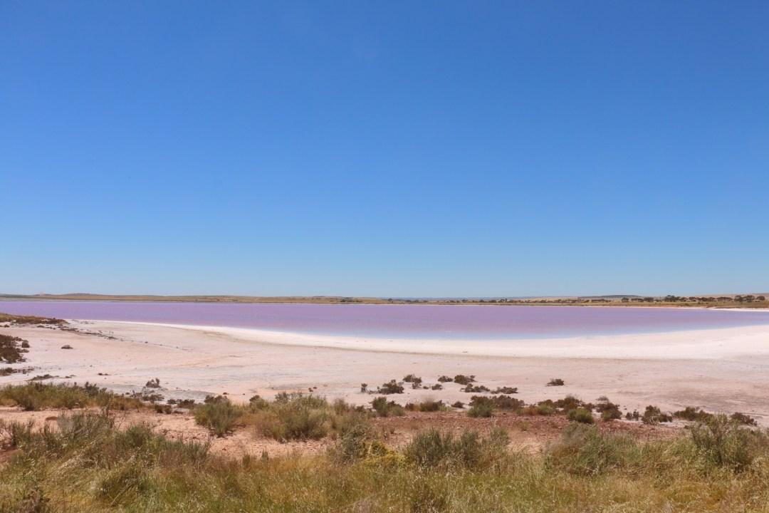 Lake Bumbunga | Pink Lake | thebraidedgirl