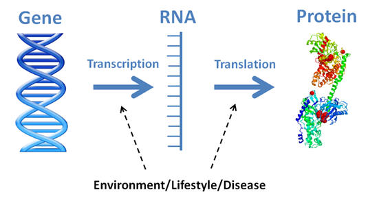One's genes do not tell us everything, they only contain the instructions. It is the proteins they make that are the true workhorses of the living world. Genes contain the instructions to make proteins via processes known as transcription and translation. These are impacted by environment, lifestyle and disease.