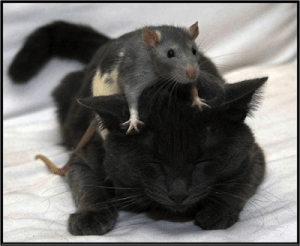 In Defence of Parasites_mice