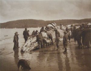 762px-The_King_of_the_Seas_in_the_Hands_of_the_Makahs_-_1910