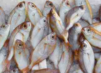 start seafood business online
