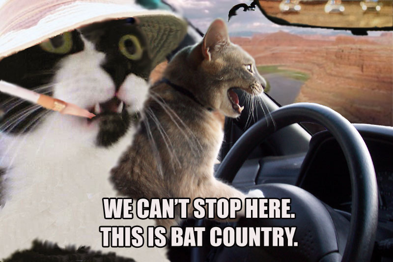 cats_bat_country