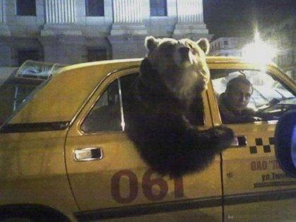 bear cab.jpg