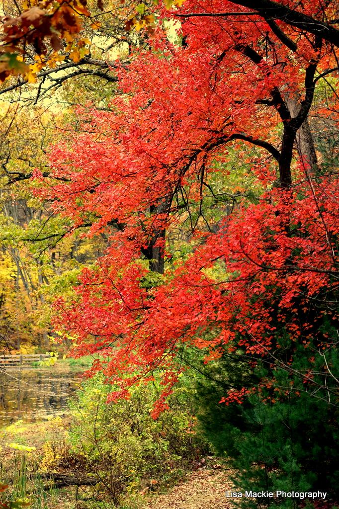 Thanksgiving_orange_tree