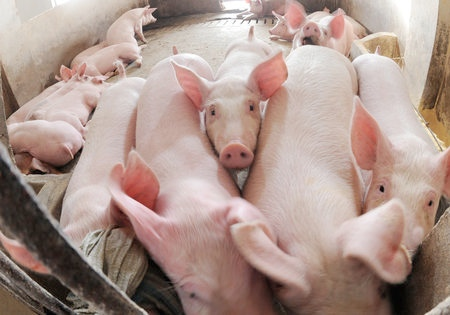Finnish Agriculture Minister Petteri Orpo said the meat exports to China may, in the long term, offset the losses caused by import restrictions levied by Russia [Xinhua]