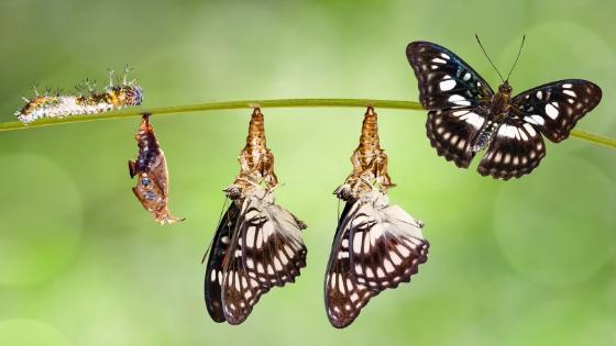 The Trust Transformation