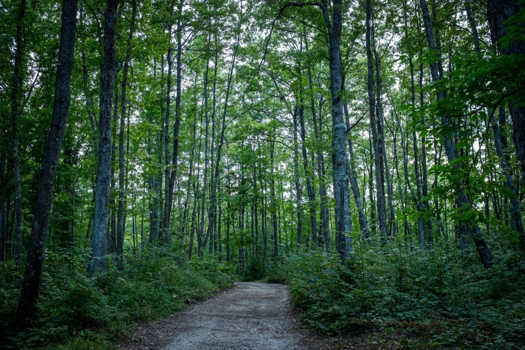 A photo of a path in the forest
