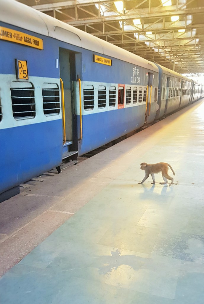 Monkey; monkey travel; monkey on the train; monkey travel; wild animal; animal; Agra Fort train station in Agra, India; railway; Indian train; trains in India; Indian railway; government railway police station Agra Fort; Govt. Rly Police Station Agra Fort, Police Station Agra Fort; police station; Indian police station; train; train station; Agra; India