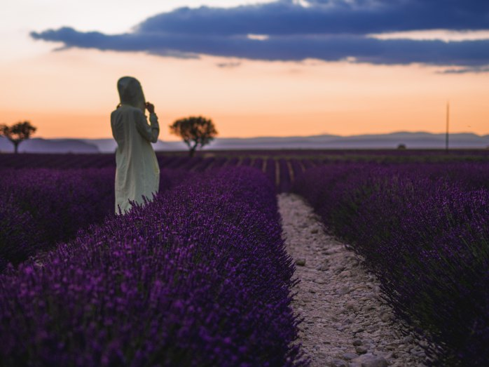 Lavender fields; Provence; France; fields; purple flowers; flowers; purple; French