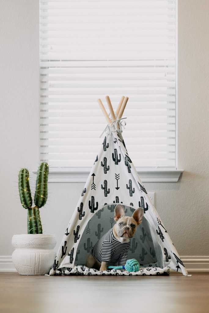 dog; French bulldog; bulldog; pug; dog in tent; tent; dog in wigwam; wigwam; dog in tipee; tipee; dog in tepee; tepee; dog in tipi; tipi; dog in yurt; yurt; staying at home is boring; boring; bored; bored dog; dog looking bored; stay home; stay at home; confinement; isolation; self-isolation; isolate; quarantine; home; house; keep your distance; don't travel; flatten the curve; social distancing; safer at home; shelter in place;