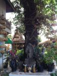 A buddhism tree inside the area of Cambodian Royal Palace, Phnom Penh