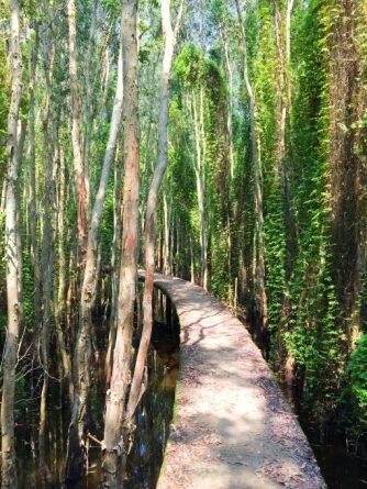 the 'road of love' inside Melaleuca forest in Tan Lap floating village, Long An