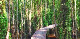 malalauca-forest-vietnam-tanlap-longan-thebroadlife