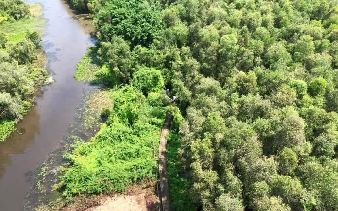 The Melaleuca forest's walking path in Tan Lap floating village, Long An