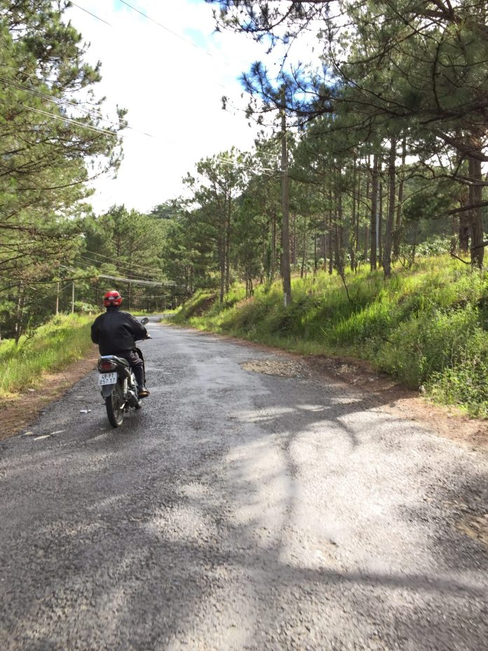 road-riding-sun-tree-dalat-vietnam-thebroadlife-travel