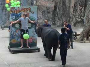 Elephant at Tiger Zoo visited in my trip Bangkok and Pattaya