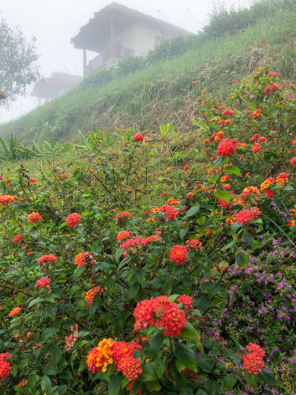 flower in topas ecolodge