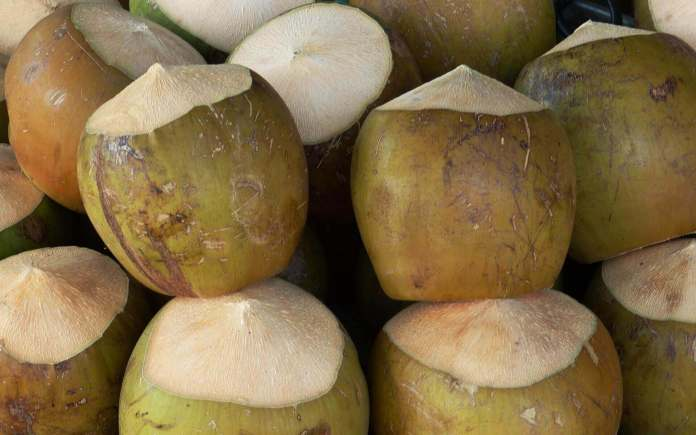 fresh coconut for drinking