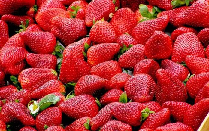 Strawberry farm in Vietnam