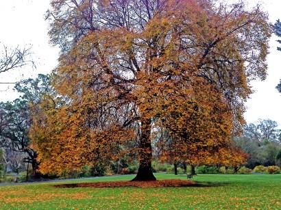 big-orange-tree-hagleypark-newzealand-thebroadlife-travel-wanderlust