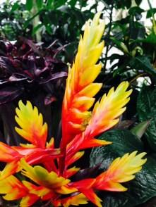 orange-flower-thebroadlife-travel-wander-hagleypark-newzealand