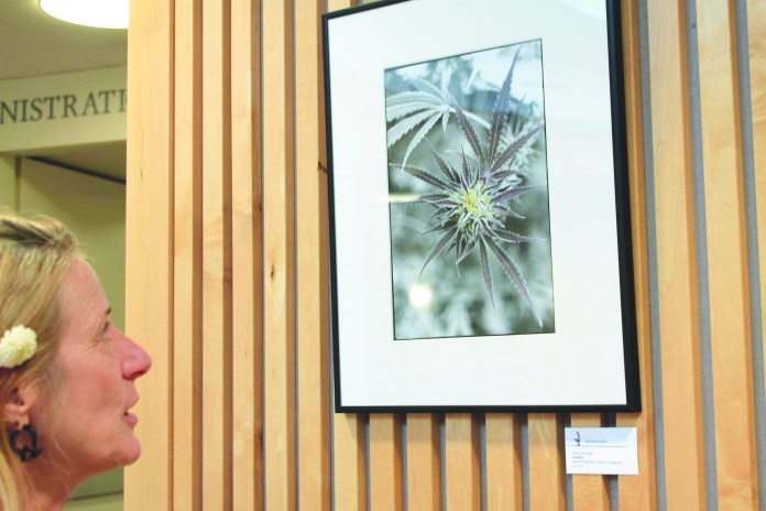 """Sherry Woodyard explains that her photo, titled """"Grateful,"""" was taken at a local organic greenhouse. Woodyard will receive her AAOT in june from COCC and has been accepted to both pacific Northwest College of Art and Oregon College o Arts and Craft."""