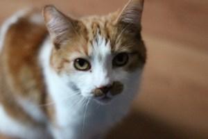 Sammi the cat