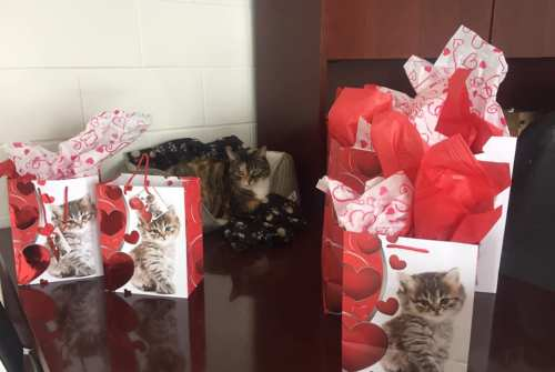 Cannington resident delivers Valentine's Day gift for animals at Township shelter