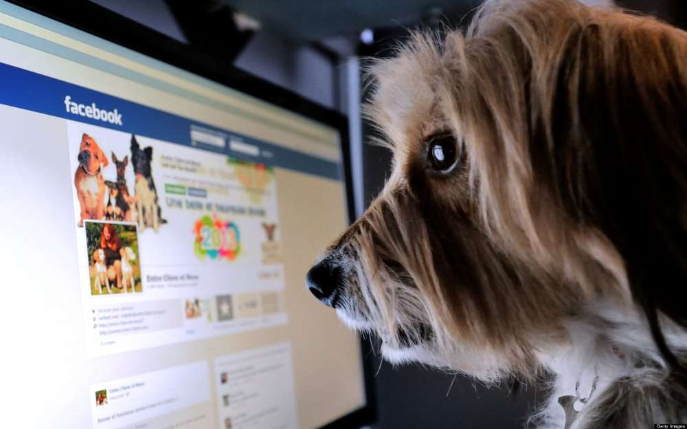 Dog Using Facebook