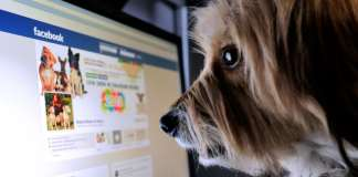 Dog Using Facebook