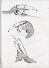 Before I go_anteater1