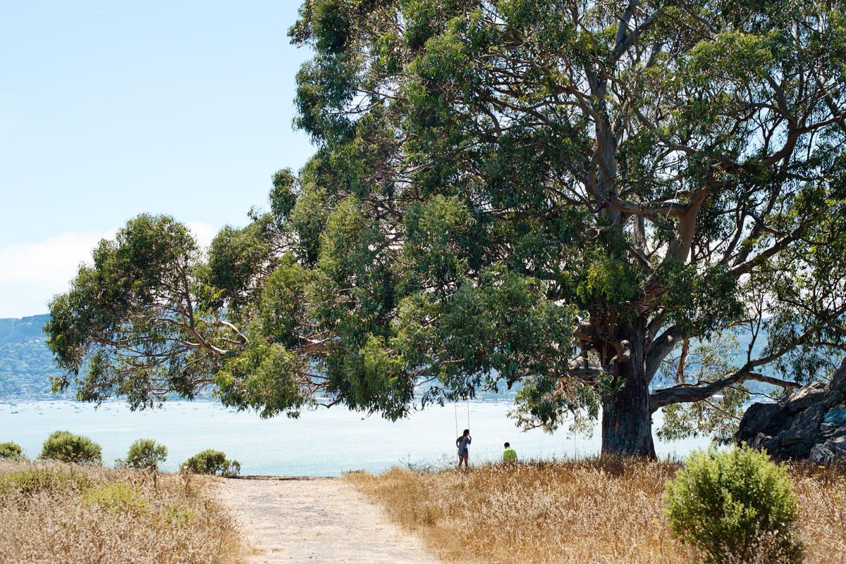 Hppie Tree Tiburon, Marin