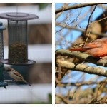Pinecone Birdfeeders and Backyard Birding