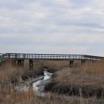 Woodland Beach and Wildlife Area