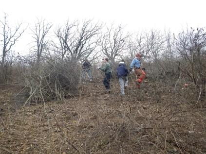 Kettle Moraine Oak Opening