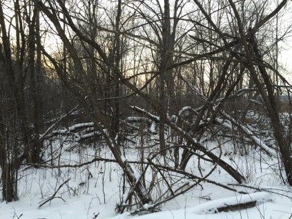 This area is just down the trail 100 yards or so from the parking lot on Hwy ZZ