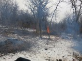 Zach, Scott, Lindsay and I stuck around to cut and burn more buckthorn