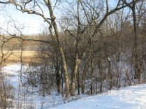 There is a bench in the swale here, the only relatively open view into the wetland from the trail