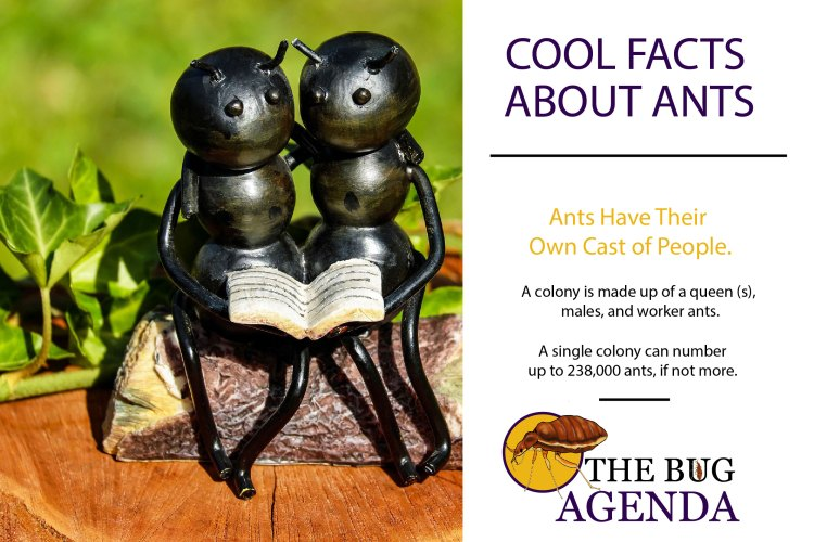 Ants Have Their Own Cast of People