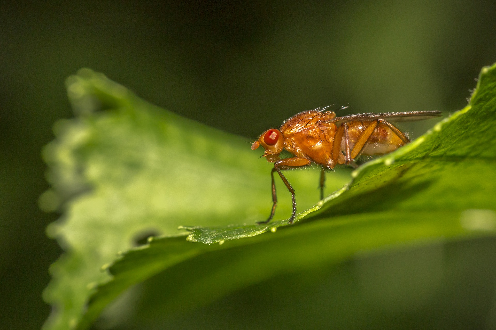 how to prevent fruit flies