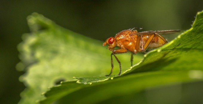 how to prevent fruit flies