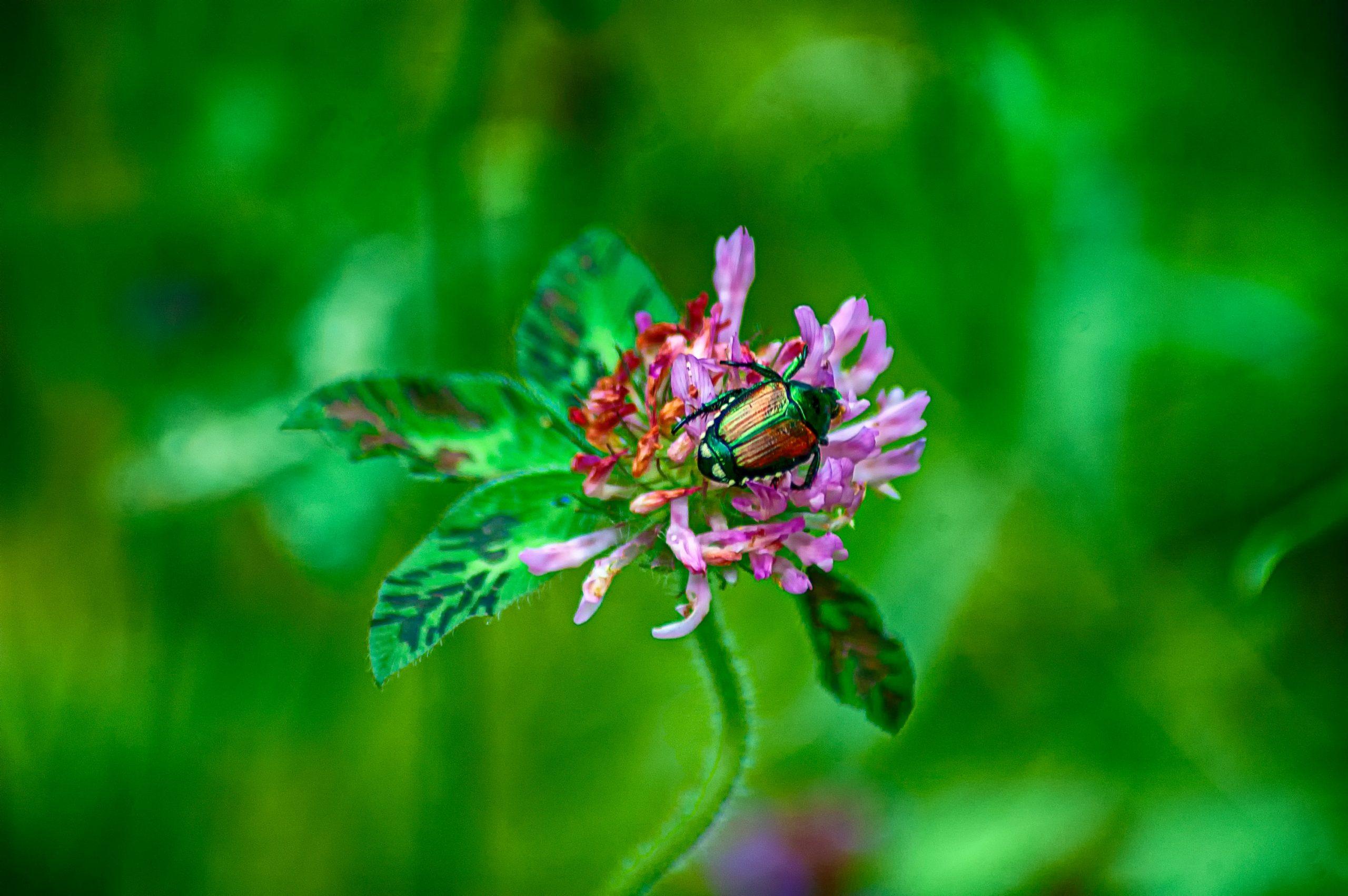 Shiny green beetle