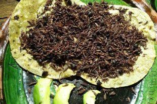 Les torti'NES : les tortillas de chapulines au guacamole