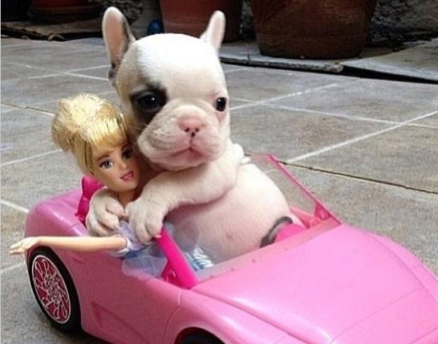 I'm driving my doll